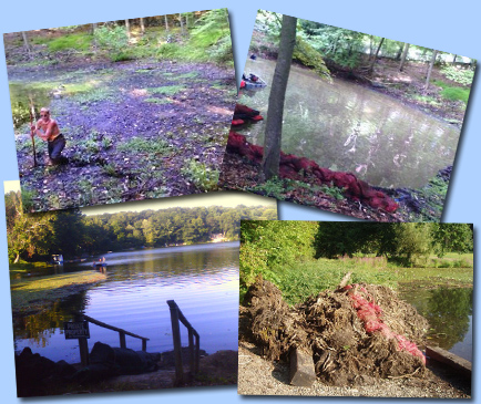 Waterfront Restoration - New Technology is coming to Save
